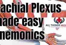 mnemonics for brachial plexus